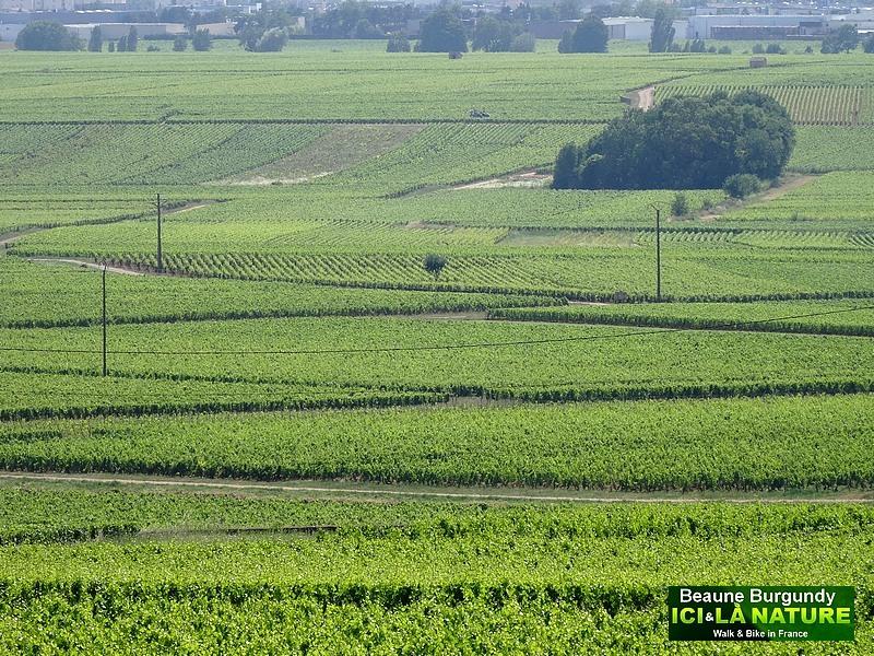 25-biking-tour-in-france-burgundy
