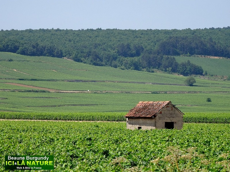 31-burgundy-beaune-vineyards-landscape