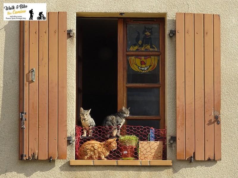 30-foix france cats